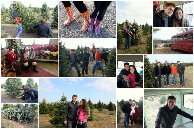 Tree Hunt